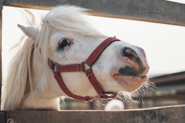 Портрет красивой белой милой лошади. симпатичный портрет белой лошади, милое лицо