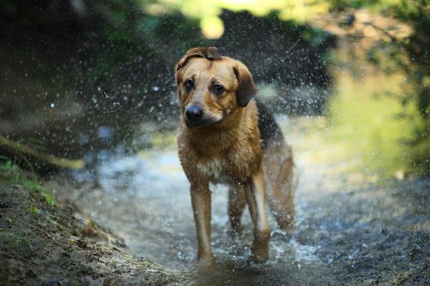 水で泳ぐ大きな雑種犬の肖像画