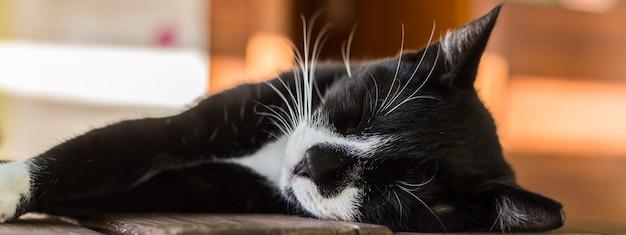 あなたのテーブルで寝ている黒と白の猫の肖像画