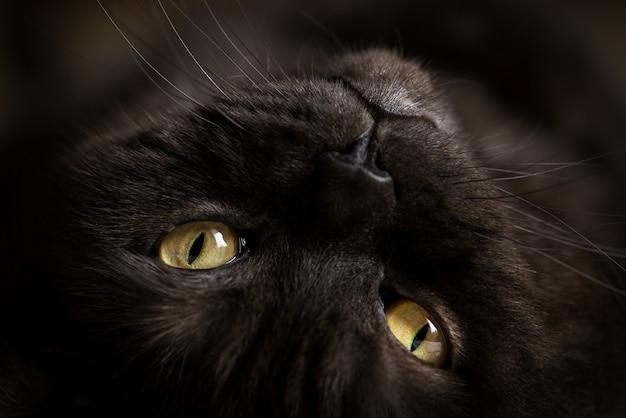 노란 눈을 가진 검은 고양이의 초상화.