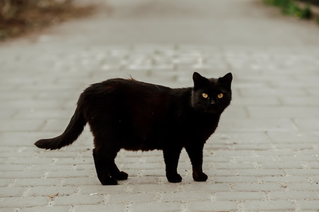 黒い猫の肖像画