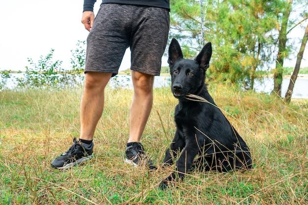 Портрет черной немецкой овчарки на зеленой траве. животное.