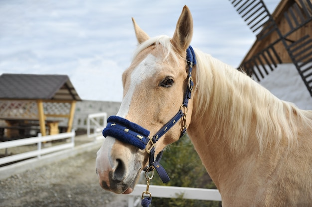 白いたてがみを持つ金髪の馬の肖像画