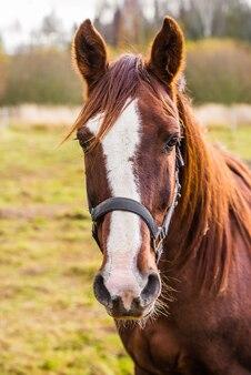 Портрет коричневой лошади на природе