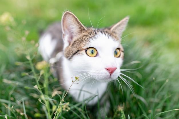 草の中を屋外で歩くかわいい猫の肖像画