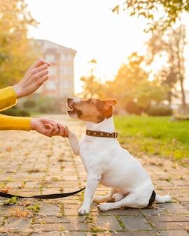 Портрет милая собака играет с владельцем