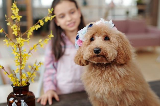 座って、背景に小さな女の子とカメラを見てかわいい犬の肖像画