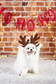 Портрет милой собаки с оленьими рогами