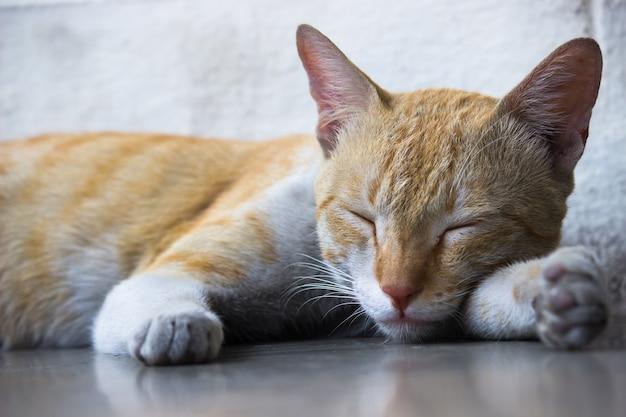 黄色い目とひげの純血種のまっすぐな耳を持つかわいい飼い猫の肖像画