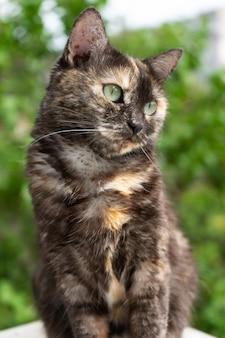 目をそらしている黄色い目を持つかわいい国産べっ甲猫の肖像画。外の写真。