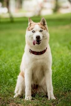 공원에서 귀여운 허스키 강아지의 초상화