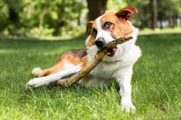 Портрет милая маленькая собака, наслаждаясь играть в парке