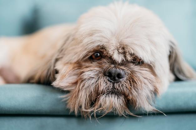 Портрет милой маленькой собаки