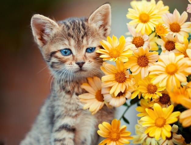 Портрет милого котенка с цветами
