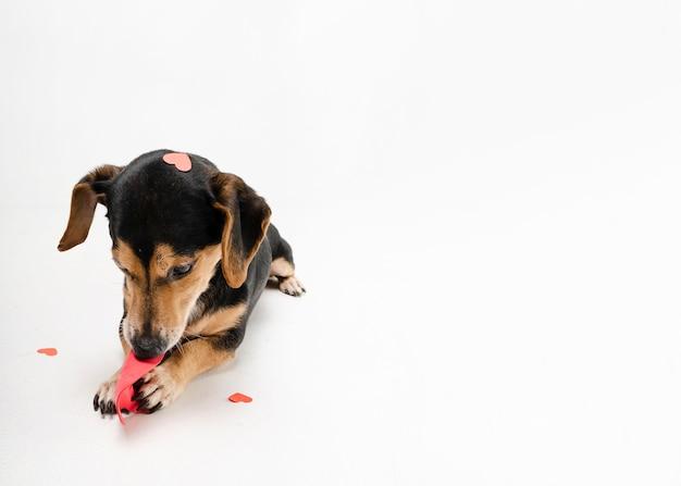 Портрет милый маленький щенок с копией пространства