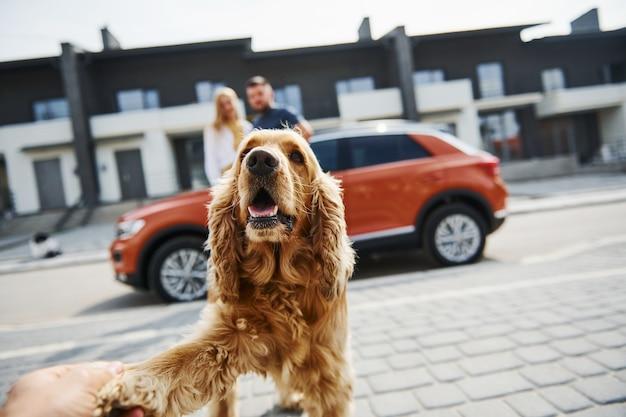 かわいいペットの肖像画。素敵なカップルが車の近くで犬と一緒に屋外で散歩をしています。