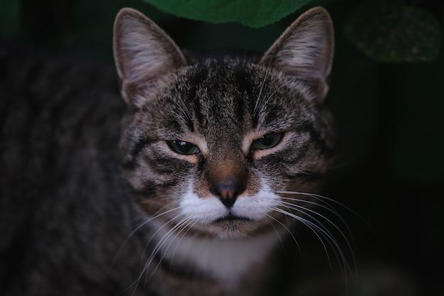 Портрет милого мурлыкающего домашнего котенка на открытом воздухе
