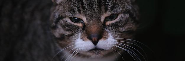屋外でかわいい喉を鳴らす国内の子猫の肖像画