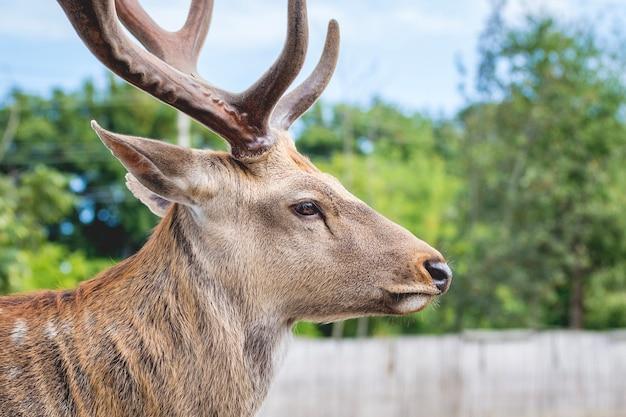 Портрет оленя с рогами крупным планом в profile_
