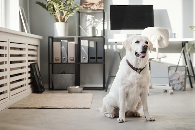 사무실에서 강아지의 초상화