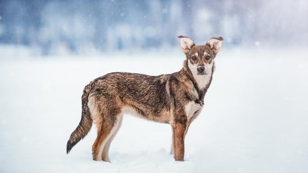 冬の雪の中で犬の肖像画