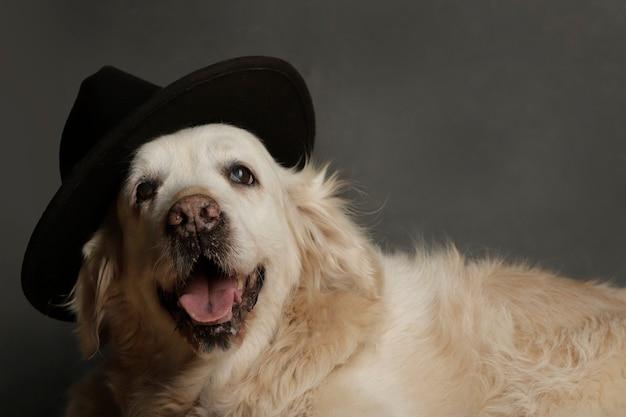 모자와 함께 카메라를보고 스튜디오에서 강아지의 초상화