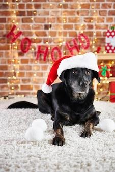 サンタの帽子をかぶった犬の肖像画
