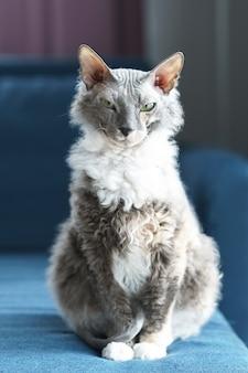自宅でドンスコイスフィンクス猫の肖像画