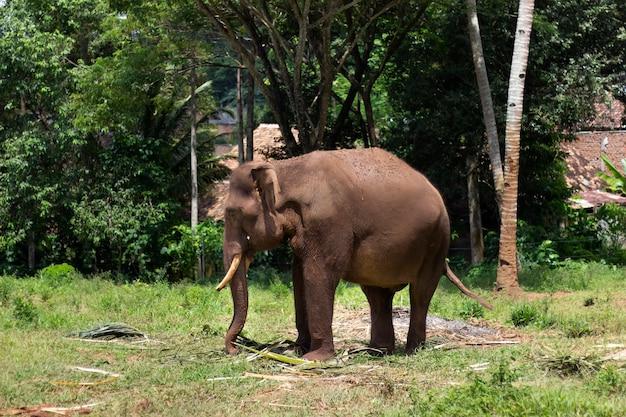 Портрет слона в зоопарке