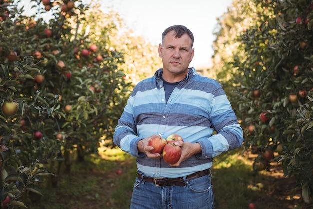 Портрет фермер держит яблоки в яблоневом саду