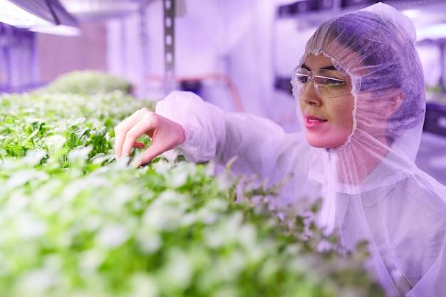 青い光、コピースペースに照らされた保育園の温室で植物を調べる女性の農業技術者の肖像画