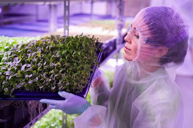 青い光、コピースペースに照らされた保育園の温室で緑の芽とトレイを保持している女性労働者の肖像画