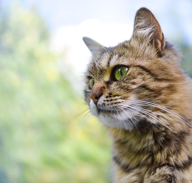 自然を背景に緑の目を持つふわふわ猫の肖像画。