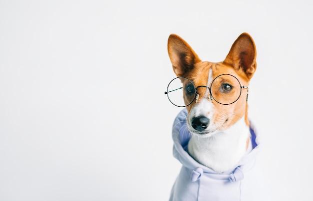 コピースペースと眼鏡とパーカーの面白い赤白バセンジー犬の肖像画。