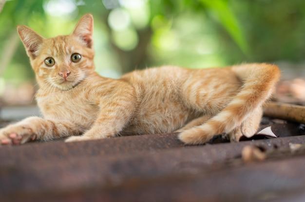 정원에서 생강 고양이의 초상화