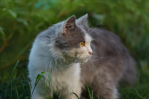 Портрет серого и белого кота в профиль крупным планом