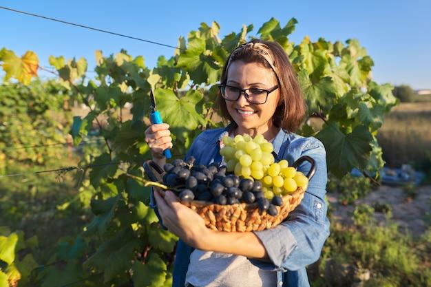 ブドウのバスケットを持つ幸せな女性の肖像画。緑と青のブドウの収穫、日没、夏、秋とブドウ園の女性。ブドウ栽培、ガーデニング、趣味、レジャーのコンセプト