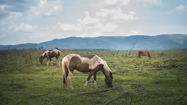 芝生と山の青い空で馬の肖像画
