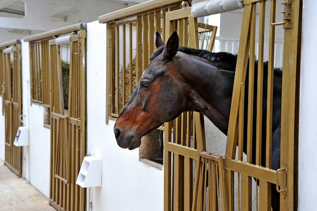 ストールボックスの馬の肖像画。