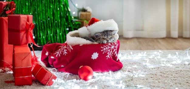 . портрет котенка в шляпе санта-клауса над елкой, подарками. рождественский кот спит