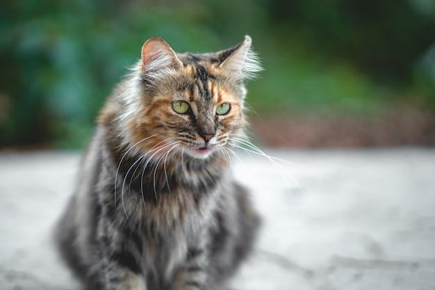 美しいボケ味の背景に立っている色とりどりの猫の肖像画