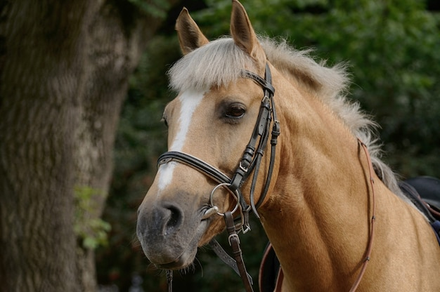 Портрет красивой коричневой лошади.