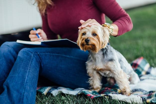 담요 위에 있는 작은 개 요크셔 테리어의 초상화, 햇빛, 밝은 채도, 자연 및 애완동물과의 일치.