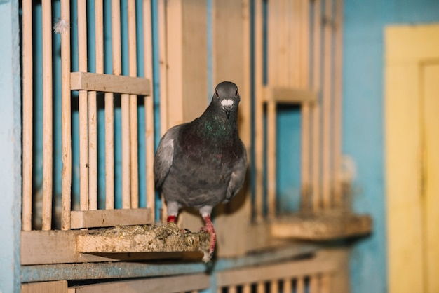 Портрет взгромоздившегося голубя