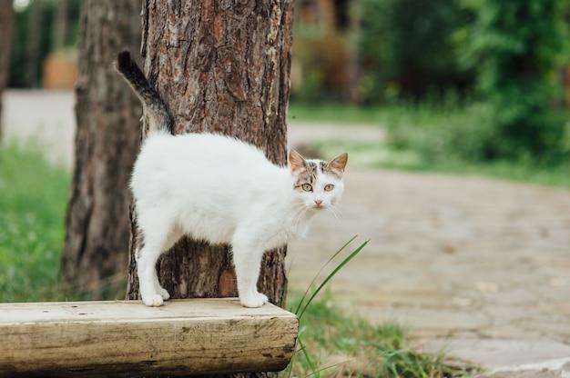 ベンチを歩いて妊娠中の猫の肖像画