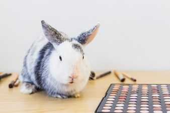Portrait of rabbit and eye shadow palette on wooden table against white background