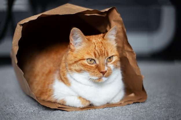 エコ紙袋で床に横たわって、赤白猫の肖像画。
