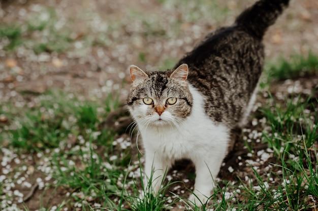 Портрет сельской кошки