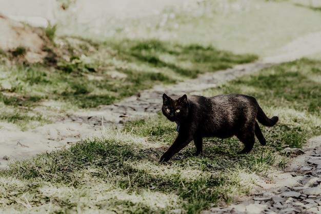 田舎の猫の肖像画