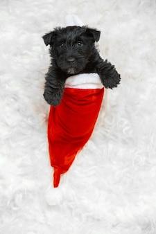 白のスコティッシュテリアの子犬の肖像画